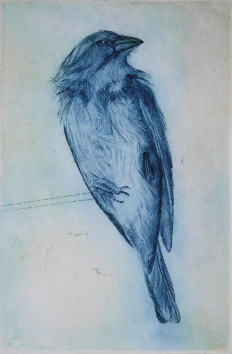 Sparrow_blue_drypoint-edited